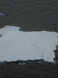 Ice Navigation RV Mirai Arctic Deployment 2013 #22